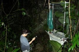 Quiros Cave - Harp Trapping