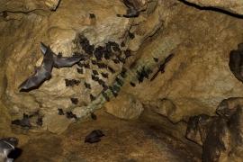 Quiros Cave