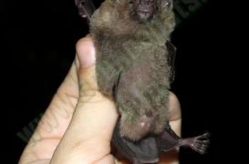 quiros_cave_bat_exploration_142