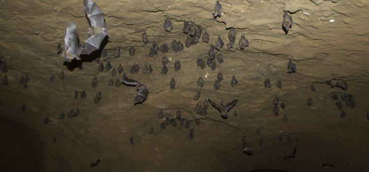 Mina de oro viejo en Península de Osa – hogar para animales únicos
